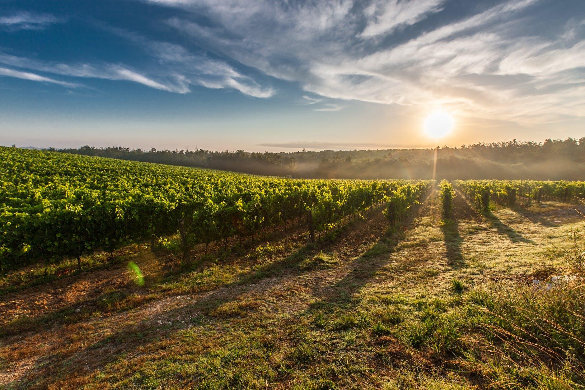 Chianti wizyta winnice